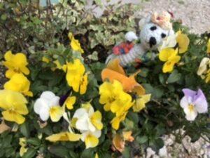 米子美容室Ring/春のふわふわとゴールデンウィークの連休のお知らせ